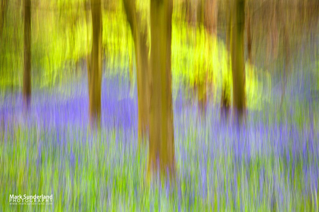 Bluebells and Spring Trees Abstract